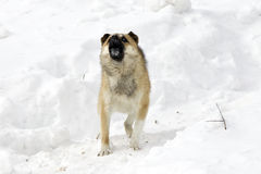 Dog and snow Stock Photography
