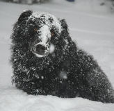 dog snow royaltyfria bilder