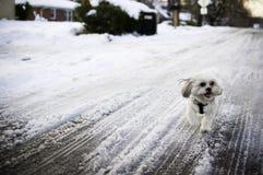 dog snow Fotografering för Bildbyråer