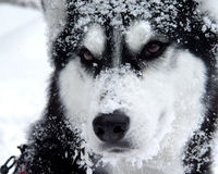dog snow royaltyfri foto