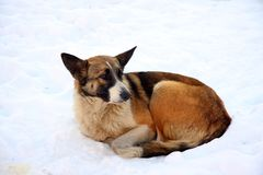 Dog on snow Royalty Free Stock Images
