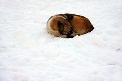 Dog on snow Stock Photo