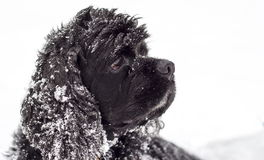 Dog snow Royalty Free Stock Photos