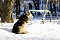 Dog in the snow. Beautiful dog with a collar in the winter on the street, one is a social problem of homelessness Stock Image