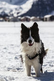 Dog on the snow Stock Photos