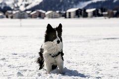 Dog on the snow Stock Photos