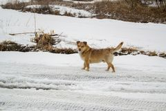 Dog in winter on the snow royalty free stock photos