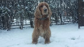 Dog on snow stock photos