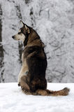 Dog on the snow. In forest stock image