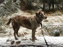 Dog and Snow on a Log Royalty Free Stock Photography