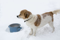A dog in snow stock image