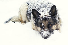 Dog on the snow Stock Photo