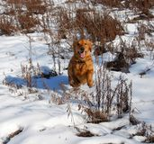 Dog at snow Stock Images