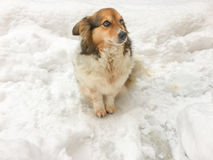 Dog on the snow. A small dog on the snow at winter Stock Images