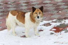 Dog on snow Stock Photography