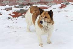 Dog on snow Stock Image