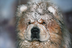 Dog after a snowfall Stock Image