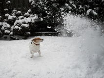 Dog snowstorm Royalty Free Stock Photo