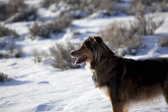 Dog in a snowy desert Royalty Free Stock Photo