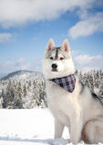 Dog in snowy forest Royalty Free Stock Photo
