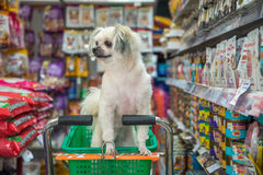 Free Dog So Cute Wait A Pet Owner At Pet Shop Stock Photo - 91957600