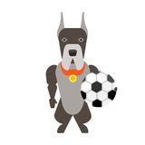 Dog with a soccer ball Royalty Free Stock Photos
