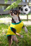 Dog and soccer. Funny dog is playing with soccer ball in park Stock Photo