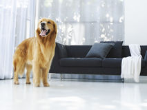 Dog and a sofa Stock Photography
