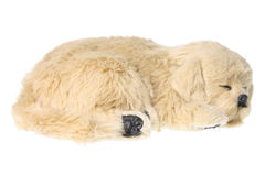 Dog Soft Toy Stock Photography