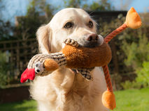 Dog with Soft Toy Stock Image