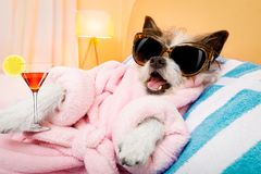 Dog spa σαλόνι wellness Στοκ Εικόνα