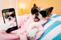 Dog spa σαλόνι wellness selfie Στοκ φωτογραφία με δικαίωμα ελεύθερης χρήσης