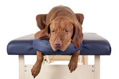 Dog spa Royalty Free Stock Photos