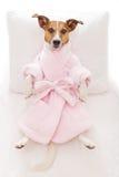 Dog spa wellness Στοκ Εικόνες