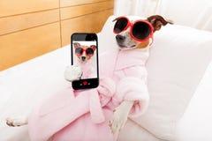 Dog spa wellness Στοκ φωτογραφία με δικαίωμα ελεύθερης χρήσης