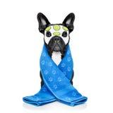 Dog spa wellness Στοκ φωτογραφίες με δικαίωμα ελεύθερης χρήσης