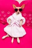 Dog spa wellness Στοκ εικόνες με δικαίωμα ελεύθερης χρήσης