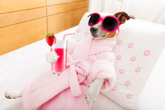 Dog spa wellness Στοκ εικόνα με δικαίωμα ελεύθερης χρήσης