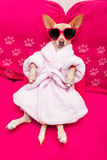 Dog spa wellness Royalty Free Stock Images