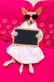 Dog spa wellness Royalty Free Stock Photography