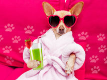 Dog spa wellness Royalty Free Stock Image