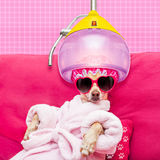 Dog spa wellness Royalty Free Stock Image