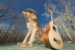 Dog spaniel of golden color with a ukulele Ukreina Stock Photos