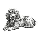 Dog spaniel hand drawn vector llustration sketch Stock Photos