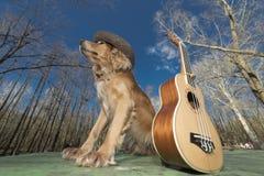 Dog Spaniel Of Golden Color With A Ukulele Ukreina Stock Photo