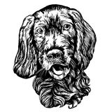 Dog spaniel pet hand drawn vector illustration realistic sketch. Dog spaniel pet hand drawn vector illustration realistic sketch Royalty Free Stock Image