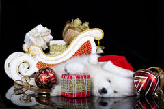 Dog spitz   wearing a santa hat Royalty Free Stock Image
