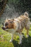Dog splash out water Stock Photo