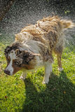 Dog splash out water Royalty Free Stock Photography