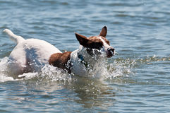 Dog splashing in the water Royalty Free Stock Images